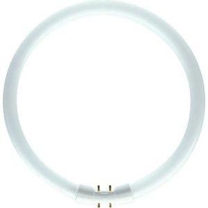 Philips kruhová MASTER TL5 Circular 22W/840 2GX13 Studená bílá